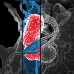 Cómo la microbiota puede hacerte feliz