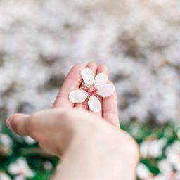 La magia de aprender a vivir con gratitud (ejercicio 2) + Meditación